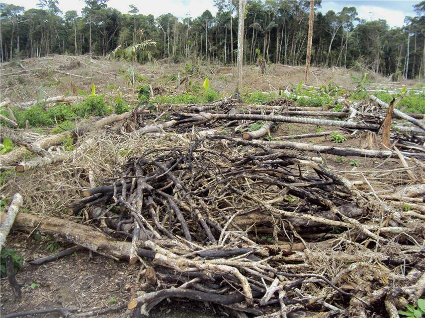Distruzione nella foresta